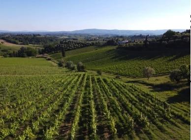 vineyard il Pozzo